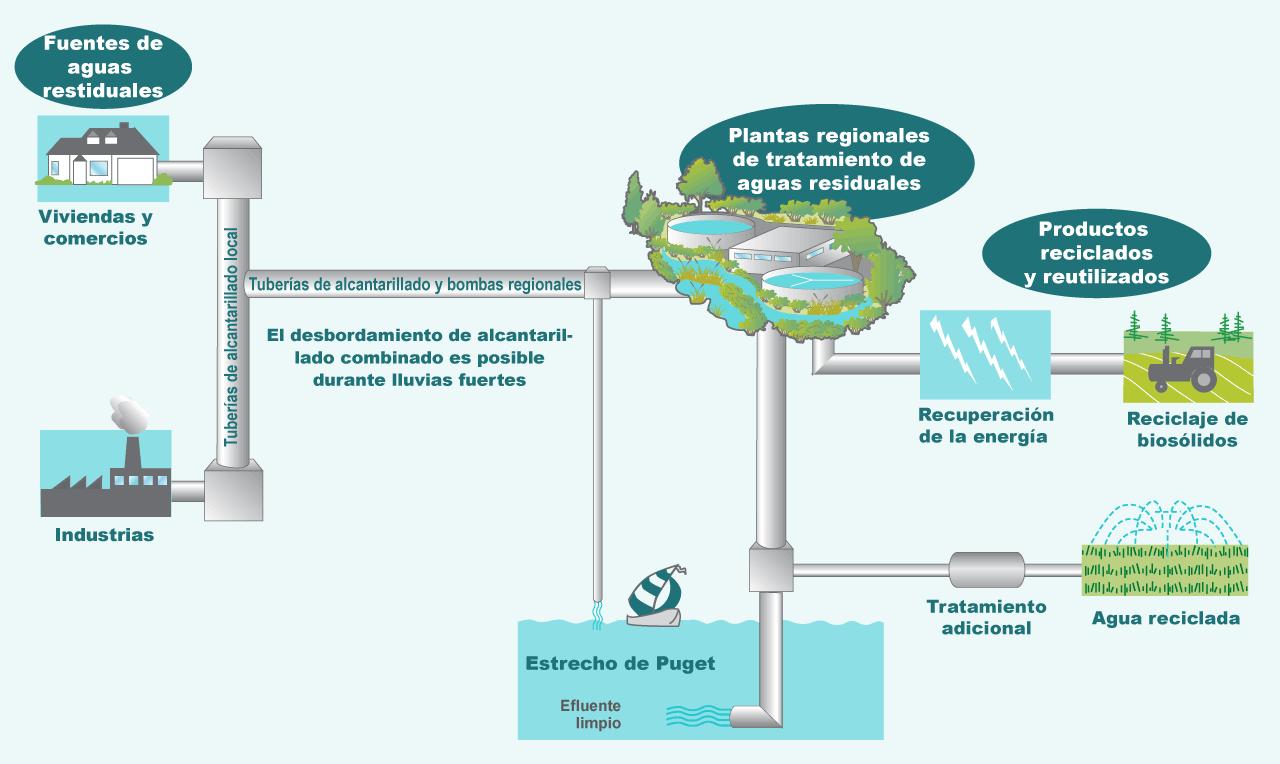 Diagrama sobre cómo King County trata el agua de nuestros hogares y comercios.